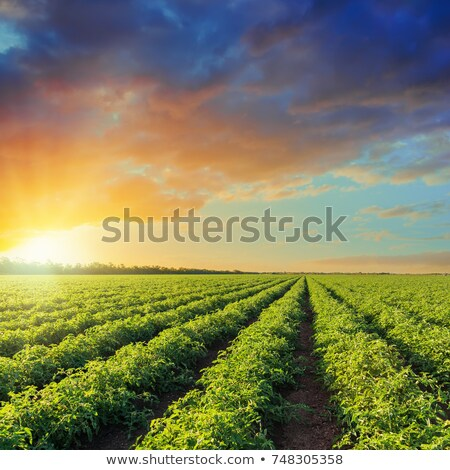 Agriculture, cultivated field in spring Stock photo © simazoran