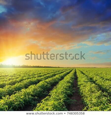 Agricoltura coltivato campo primavera presto terra Foto d'archivio © simazoran