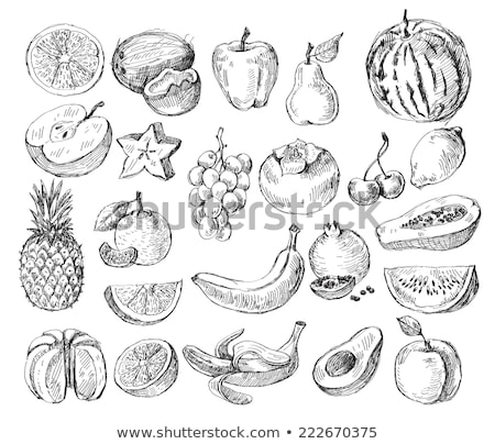 Watermelon hand drawn sketch icon. Stock photo © RAStudio