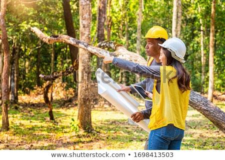 служащих · заседание · лес · бизнеса · дерево - Сток-фото © is2