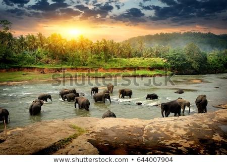 Elefántok Sri Lanka nyáj fürdik dzsungel folyó Stock fotó © Givaga