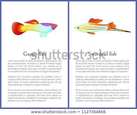 Renkli vektör posterler örnek neon Stok fotoğraf © robuart