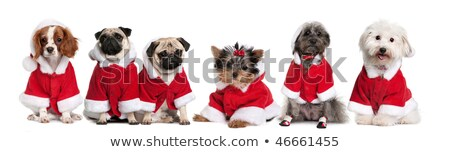 Stock photo: cute group of many dogs dressed as santa claus