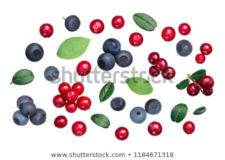Lingonberry bilberry v. vitis-idaea myrtillus,  top Stock photo © maxsol7