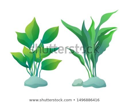 Bitkiler kama yaprakları bitki ayarlamak Stok fotoğraf © robuart