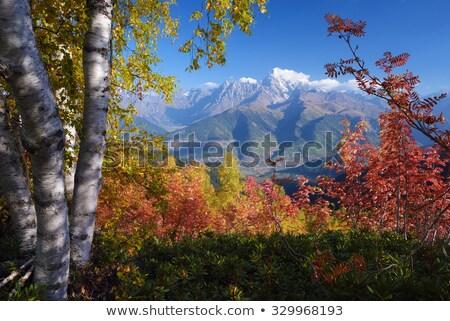 autumn landscape with birch forest and mountain peak ushba stock photo © kotenko