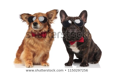 adorable black french bulldog sitting and looking to side Stock photo © feedough