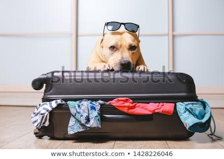 blanco · perro · jóvenes · animales · personal - foto stock © cynoclub