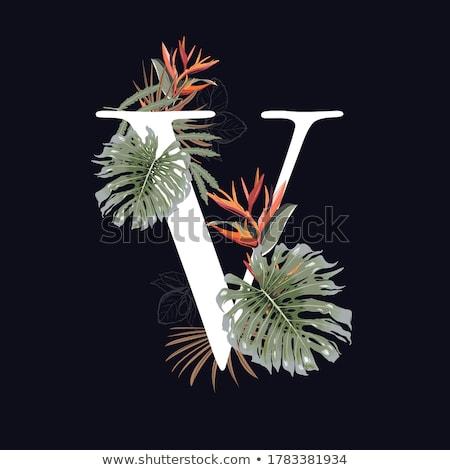 Nyár trópusi édenkert illusztráció tipográfia levél Stock fotó © articular