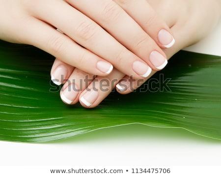 belo · mãos · manicure · folhas · verdes · isolado - foto stock © serdechny