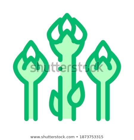 Alimentação saudável vegetal serpente feijão vetor assinar Foto stock © pikepicture