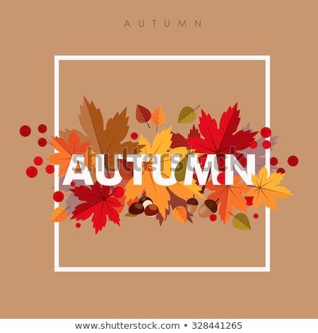 Ajándék őszi levelek természet évszak ajándék doboz csomagolópapír Stock fotó © dolgachov