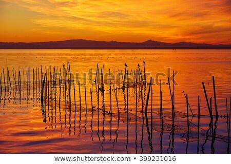 gün · batımı · ağaç · ışık · yaz · göl - stok fotoğraf © lunamarina