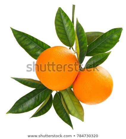 twee · geheel · rijp · sinaasappelen · geïsoleerd · witte - stockfoto © raywoo