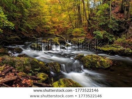 waterfall river Bode Stock photo © LianeM