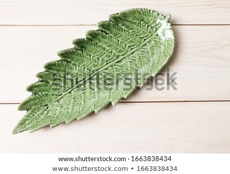 Baby Fern Stock photo © papa1266