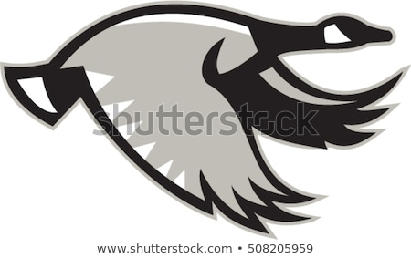 Канада гусь Flying вид сбоку ретро черно белые Сток-фото © patrimonio