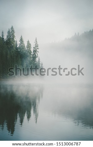 Forest Reflection Stock photo © SimpleFoto