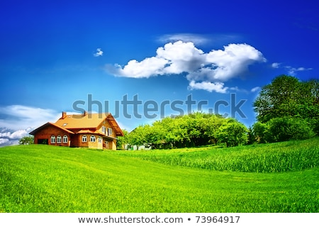 Echt weide hemel zomer gras zon Stockfoto © Taiga