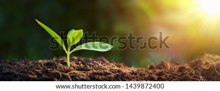New Growth Stock photo © blamb