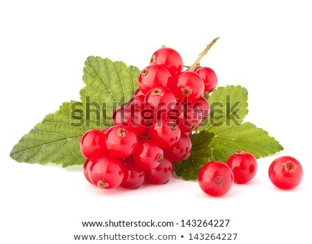 Red currants and green leaves still life  Stock photo © natika