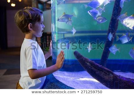 Kamer vis tank aquarium natuur Stockfoto © wavebreak_media