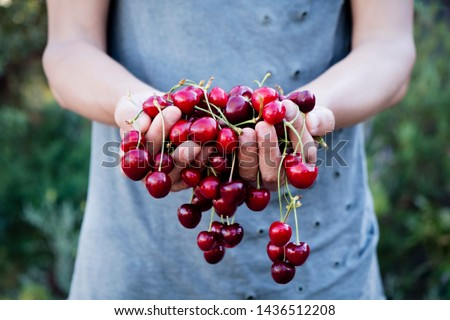 man with freshly collected cherries in his hands Stock photo © nito