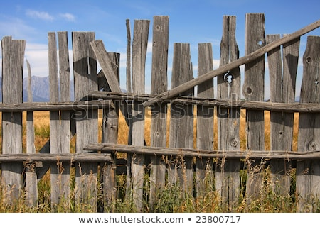 Dilapidated old wooden fence - rural background Stock photo © pzaxe