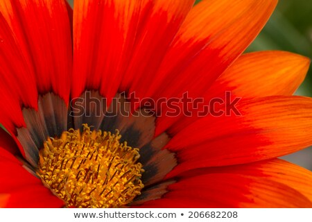 Núcleo laranja flor beleza planta Foto stock © pzaxe