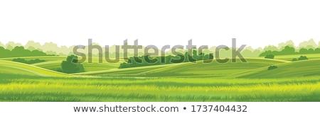 Pasture Stock photo © alexeys