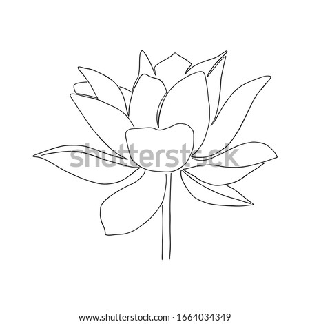 Black and White Water lily Stock photo © nuttakit