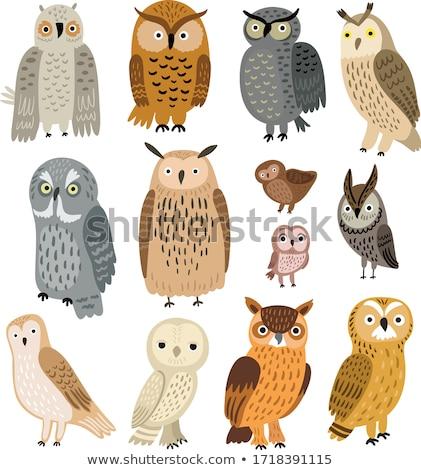 Owls Stock photo © adamson