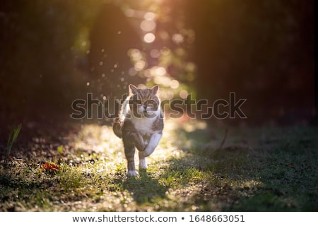 Bonitinho gato jardim jovem cara amor Foto stock © meinzahn