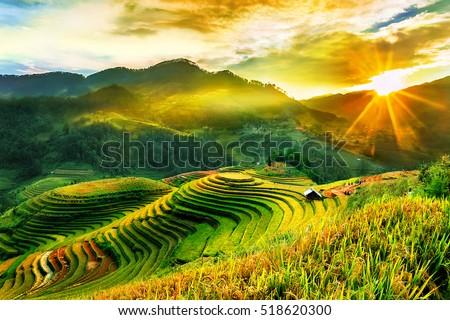 Manzara yeşil pirinç alanları güzel doğal Stok fotoğraf © Yongkiet
