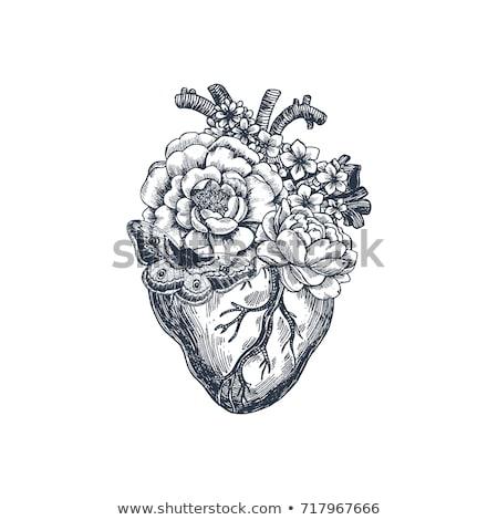 dark heart Stock photo © clearviewstock