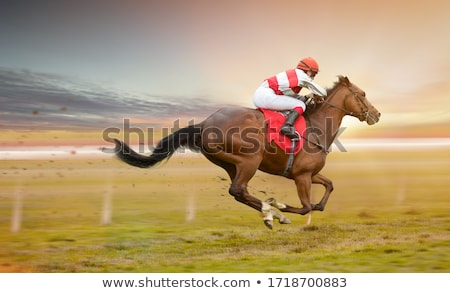 racehorse outdoor Stock photo © fanfo