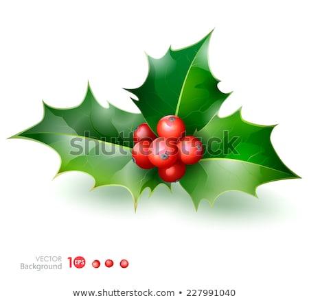 Noel · meyve · eps · 10 · süs - stok fotoğraf © beholdereye