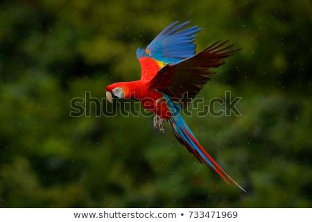 Színes papagáj fa jelenet illusztráció fű Stock fotó © bluering