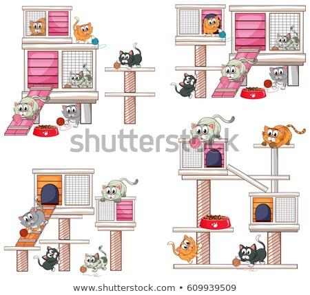 Many cats on cat condo Stock photo © colematt