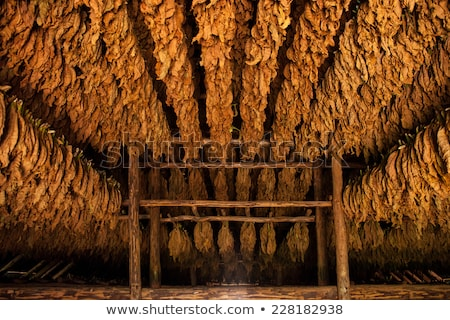 Tobacco shed or barn for drying tobacco leaves in Cuba Stock photo © Arsgera