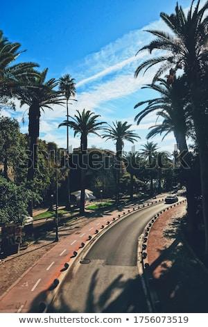 Lege weg palmbomen zuidelijk stad reizen Stockfoto © Anneleven