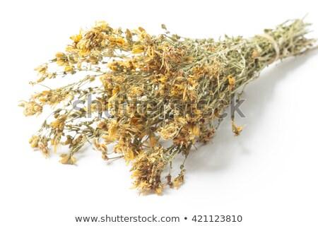 Dried herbs Hypericum perforatum Stock photo © deyangeorgiev