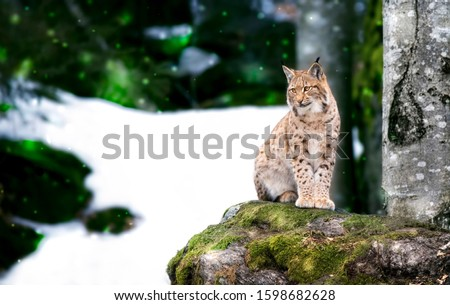 Cat's rock - czech republic Stock photo © Sarkao