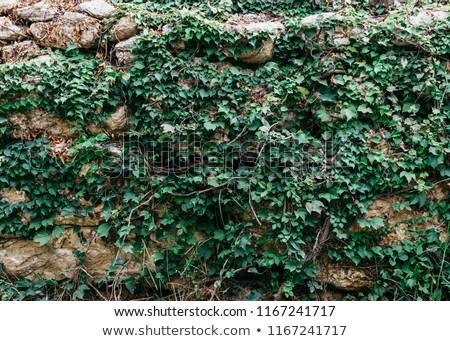 Kopott cement kő falak Spanyolország kőművesmunka Stock fotó © lunamarina