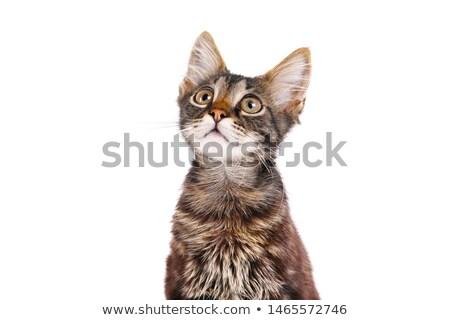 Poesje weinig kat spelen gras Stockfoto © MKucova