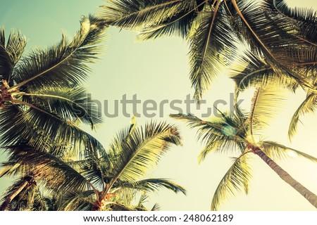 palmiye · yaprağı · mavi · gökyüzü · gökyüzü · orman · doğa · arka · plan - stok fotoğraf © amok