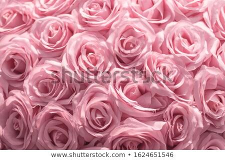 Flor-de-rosa foco lado macro flor rosa Foto stock © michaklootwijk