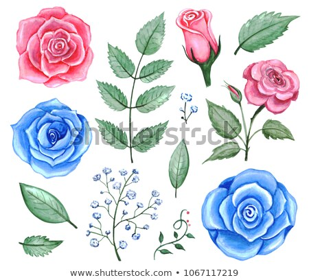 Set of flowers and floral elements isolated on white background. Stock photo © MarySan