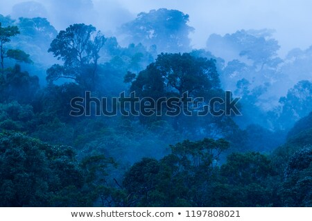 kék · növény · halftone · minta · tavasz · absztrakt - stock fotó © milsiart