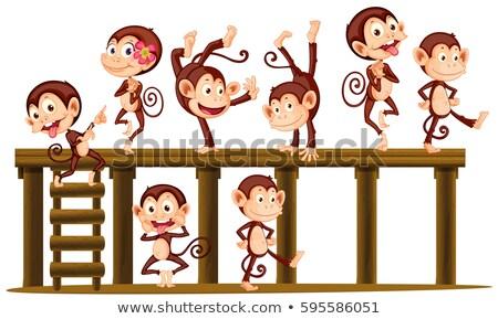 építkezés · majom · illusztráció · védősisak · számítógép · kalapács - stock fotó © colematt